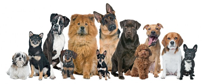 Choosing a Dog Breed to Match Your Temperament and Lifestyle